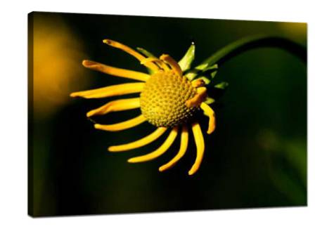 Take Creative Photos of Micro Flowers